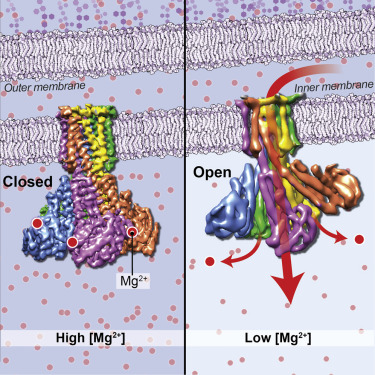 Structure of Magnesium Channel CorA