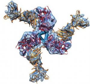 Prefusion Structure of Trimeric HIV-1