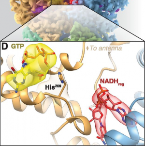 Mapping Small Ligands on Dynamic Metabolic Enzymes