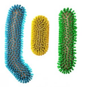 Structures of Chimeric Hemagglutinin on Influenza Virus